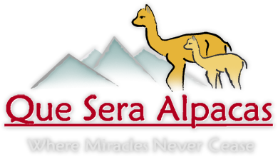 Que Sera Alpacas - an alpaca farm in Santa Fe, New Mexico